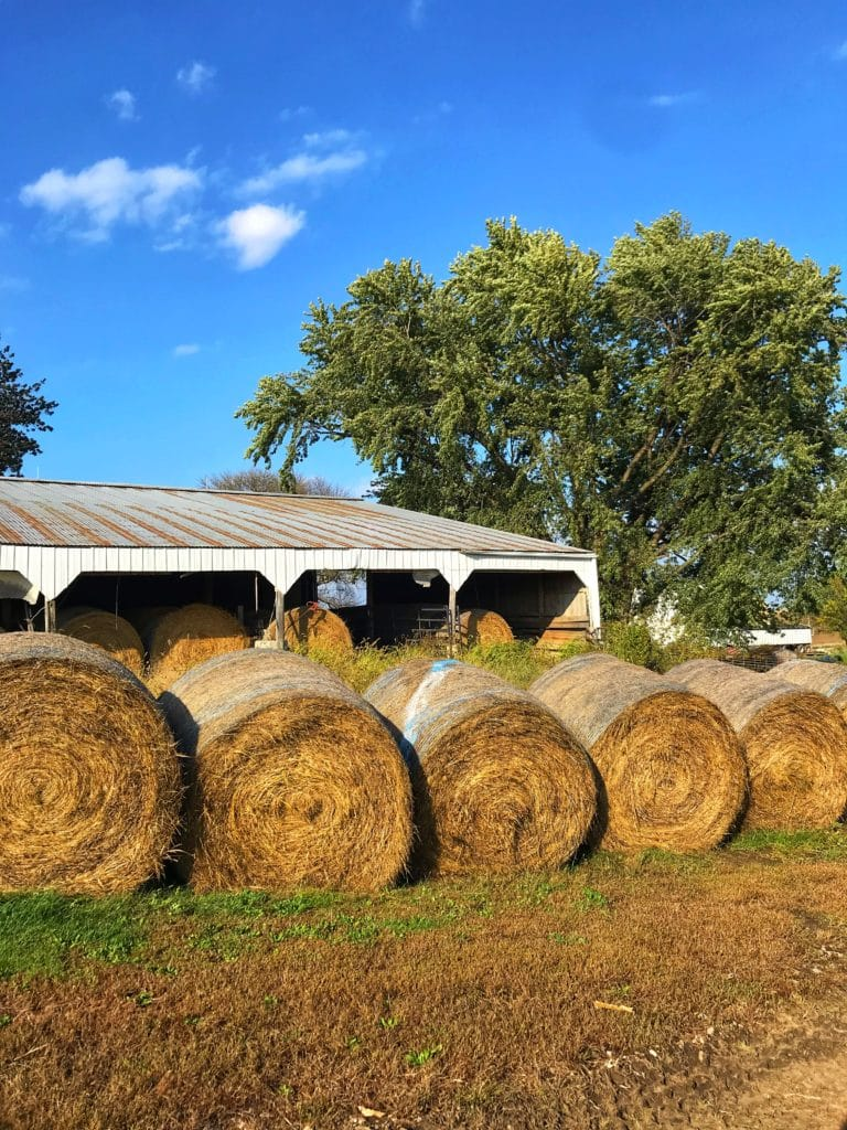 Hay bales on the farm.